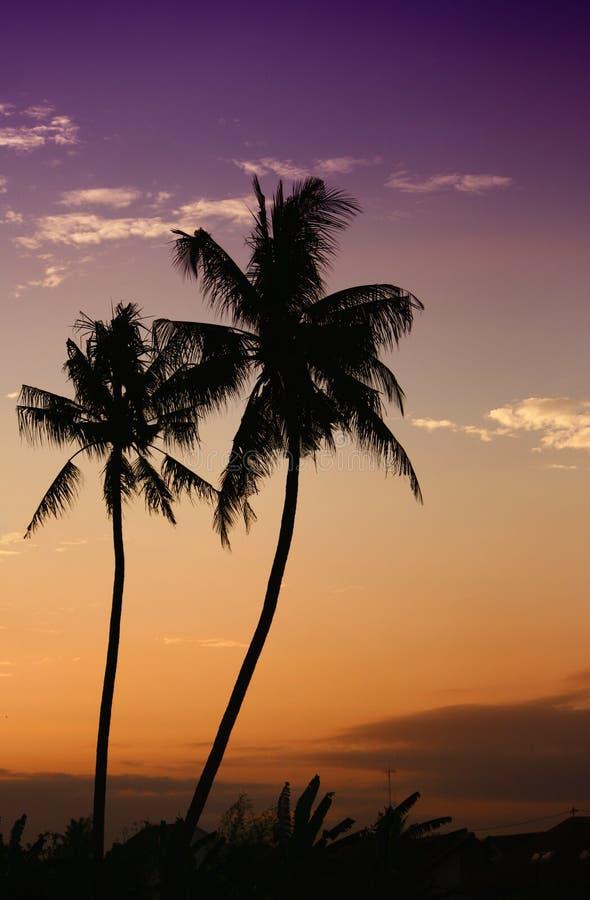 Palmas de coco en la isla del trópico de bali fotografía de archivo