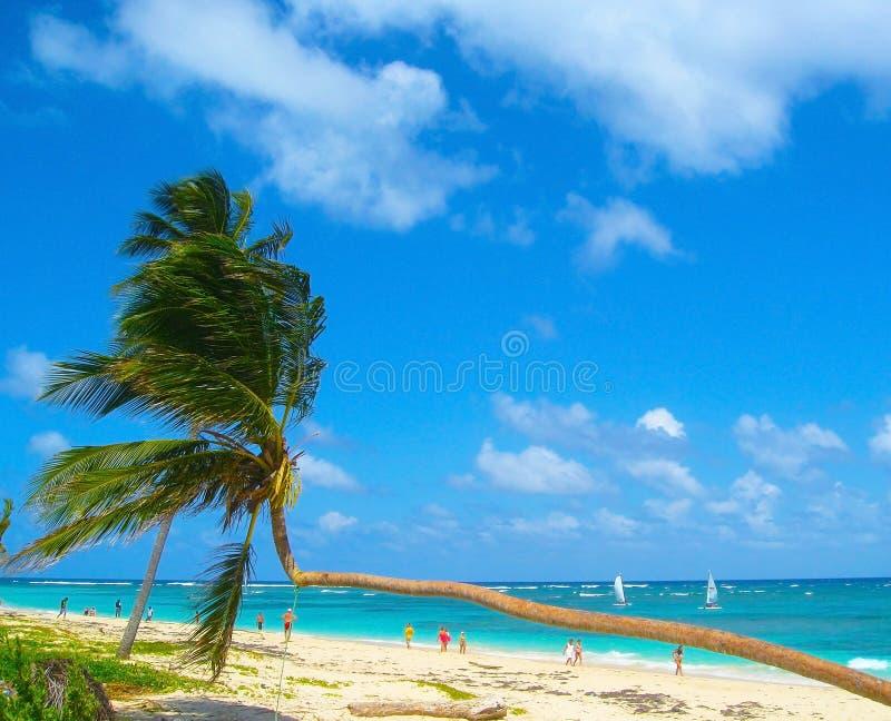Palmas de coco en la playa arenosa blanca, costa de mar del Caribe, República Dominicana imágenes de archivo libres de regalías