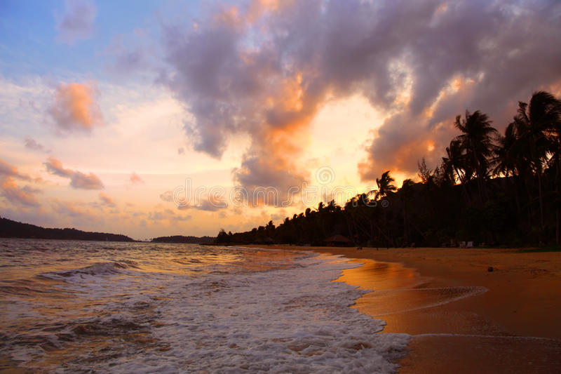 Palmas de coco en la playa de la arena en trópico imagen de archivo