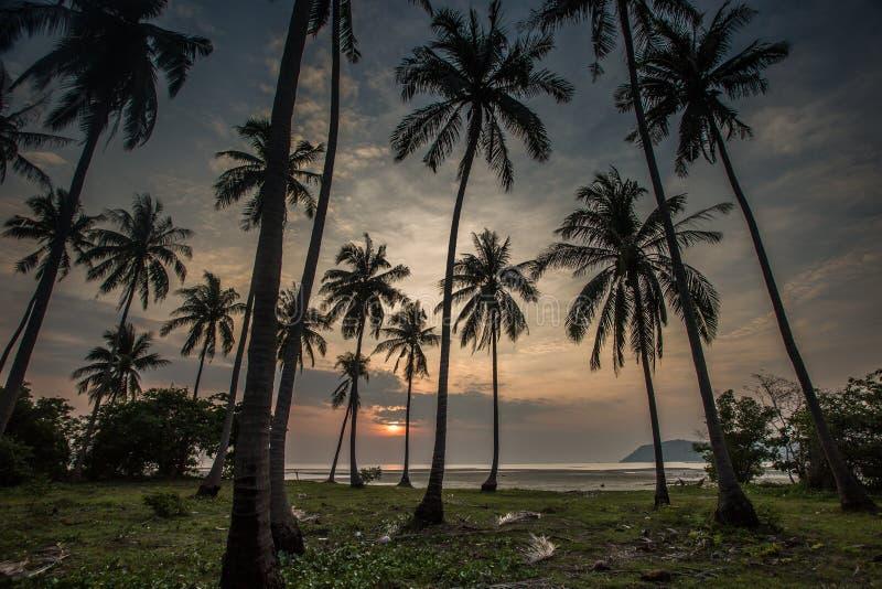 Palmas de coco en la playa de la arena en trópico en puesta del sol imagenes de archivo