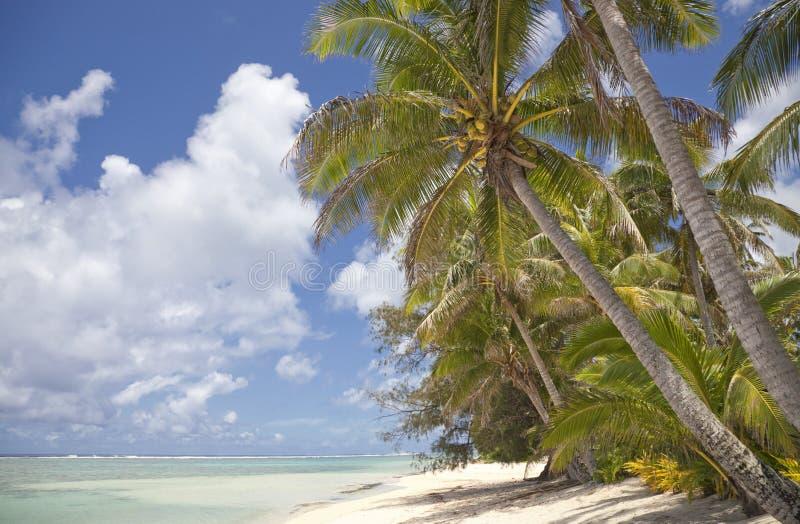 Palmas de coco en la playa tropical imagen de archivo