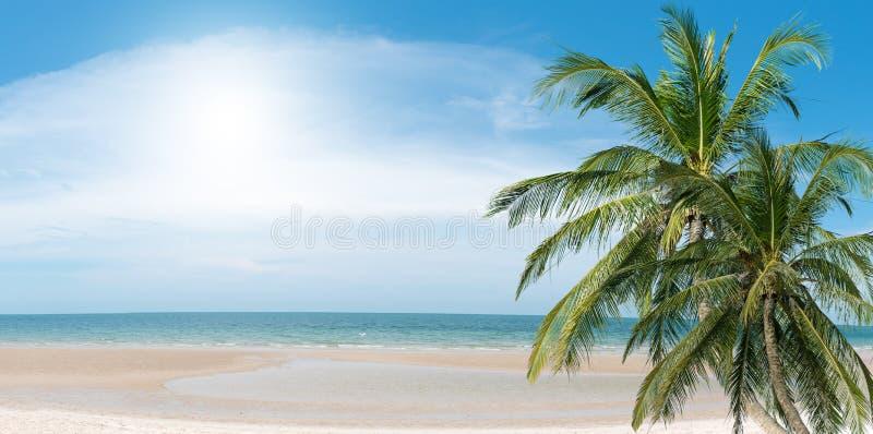 Palmas de coco na praia imagem de stock