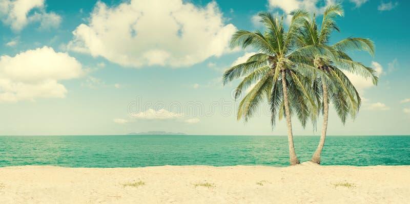 Palmas de coco na praia fotografia de stock