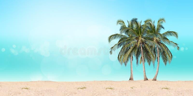 Palmas de coco na praia foto de stock royalty free