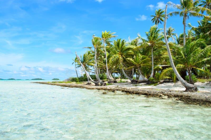 Palmas de coco em uma ilha do Pacífico imagens de stock royalty free