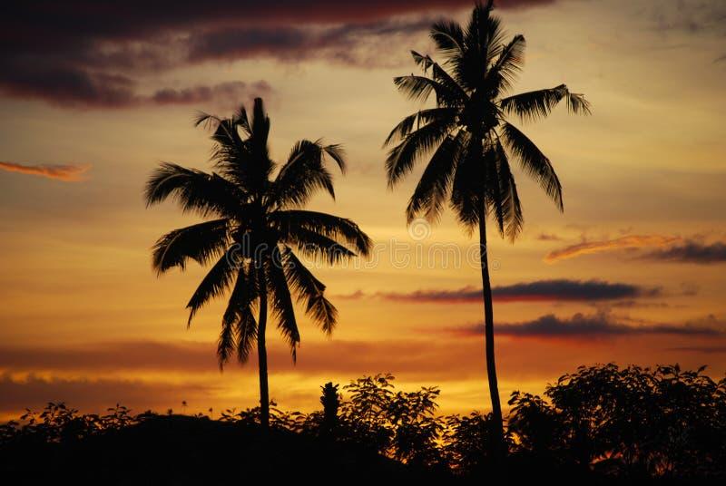 Palmas de coco no por do sol Mindanao Filipinas fotos de stock