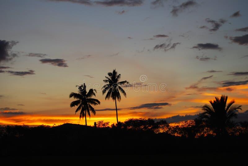 Palmas de coco no por do sol Mindanao Filipinas imagem de stock royalty free