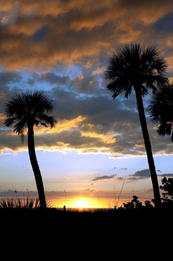 Palmas de coco silueteadas sobre puesta del sol colorida adentro fotografía de archivo