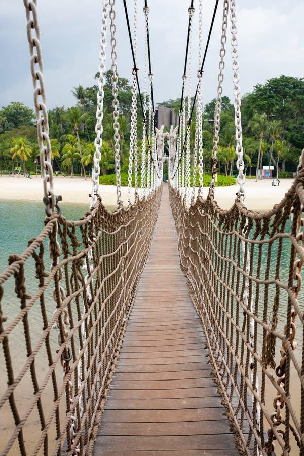 Palmas de coco y vegetación tropical. imagen de archivo