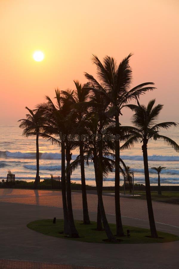 Palmas de Durban foto de stock royalty free