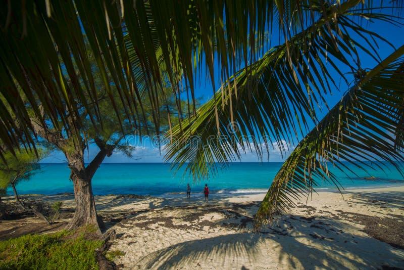 Palmas de la isla de Bimini foto de archivo libre de regalías