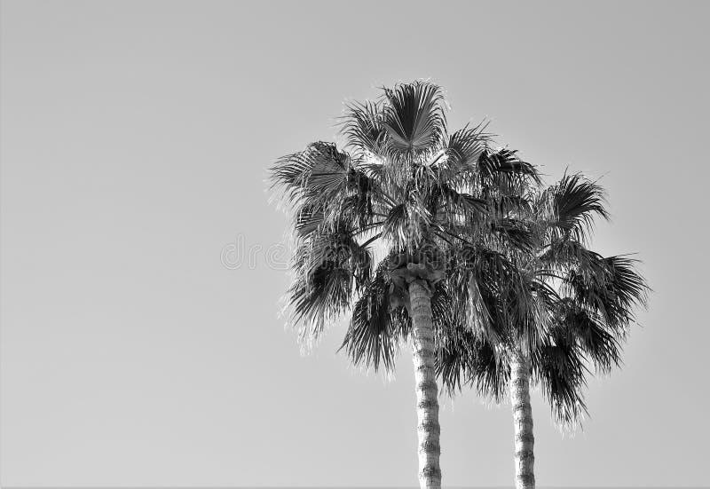Palmas de la montaña del desierto fotografía de archivo