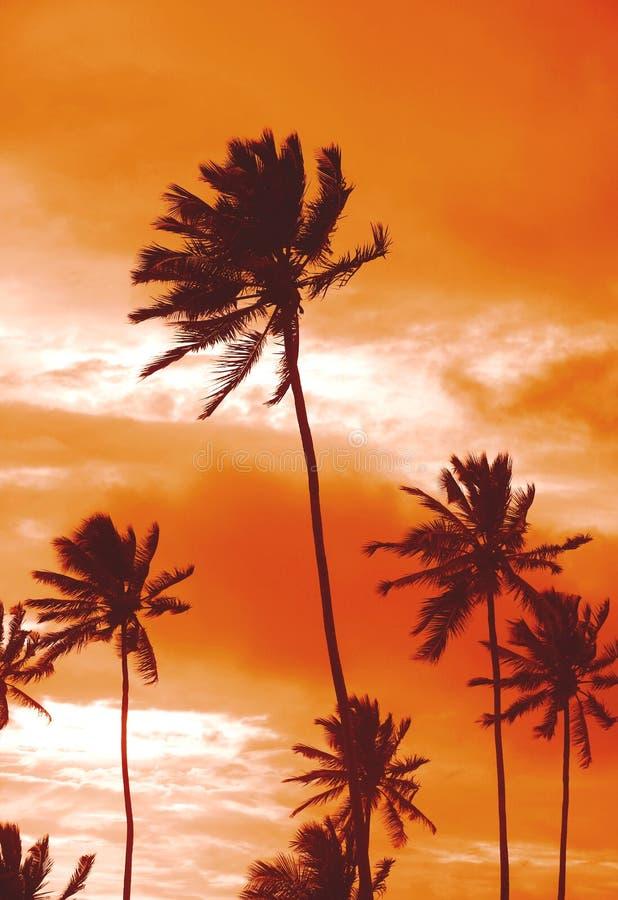 Palmas de la puesta del sol fotografía de archivo libre de regalías