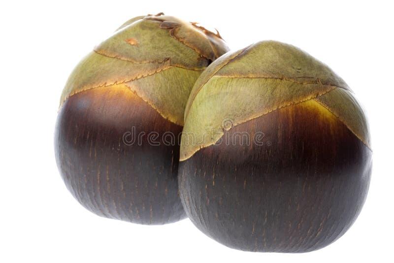 Download Palmas De Toddy Frescas Aisladas Imagen de archivo - Imagen de aislado, cocos: 7281165