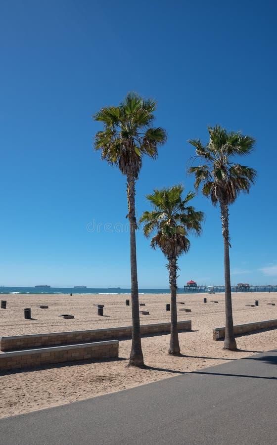Palmas del árbol en la playa puplic en California fotos de archivo