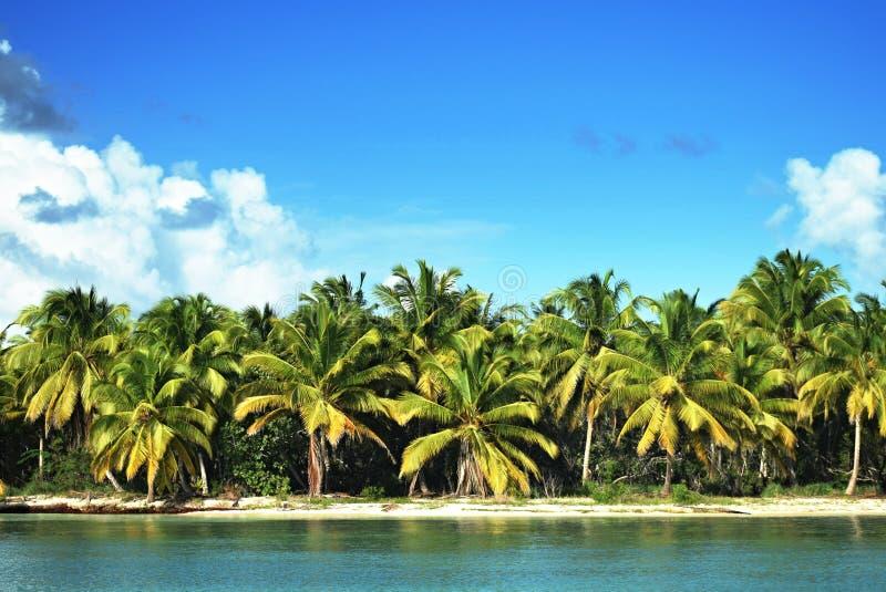 Palmas del Caribe en la playa imagen de archivo