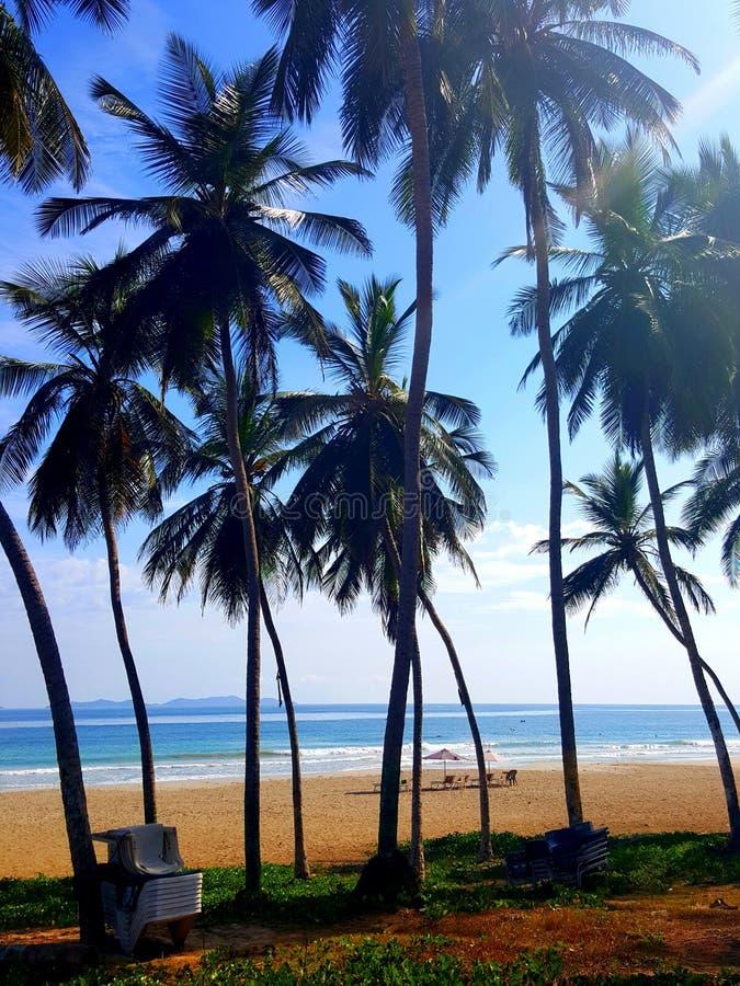 Palmas del paraíso en el Caribe imagen de archivo libre de regalías