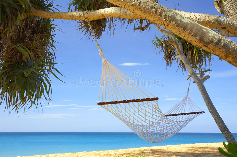 Palmas e hammock foto de stock