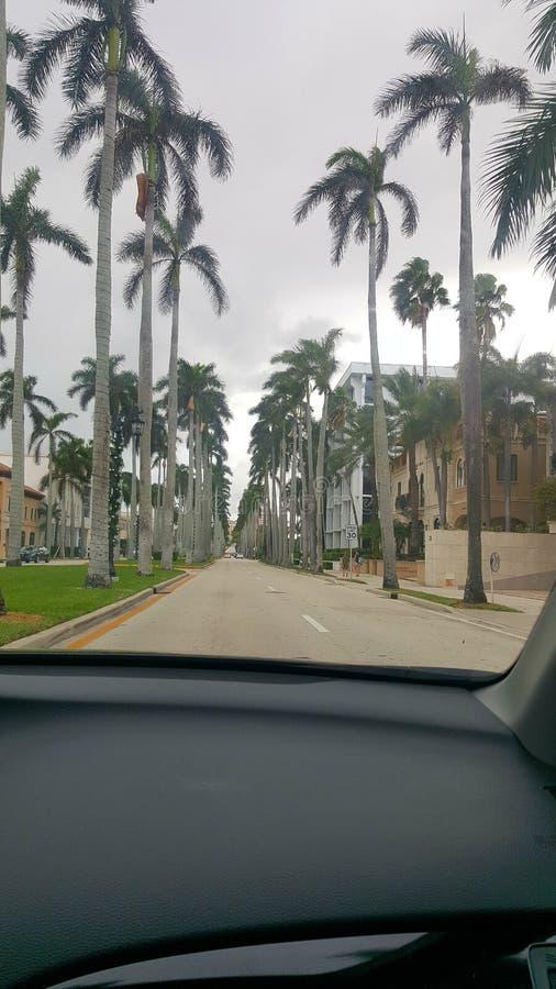 Palmas em Florida atrás de uma janela de carro fotos de stock royalty free