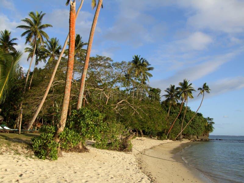 Palmas em uma praia na baía da manga foto de stock royalty free
