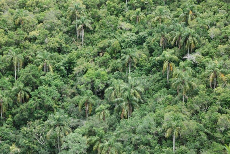 Palmas en bosque subtropical imagenes de archivo