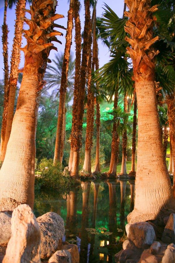 Palmas en el desierto imagen de archivo