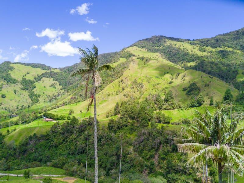 Palmas en el valle de Cocora de la opinión aérea de Salento imagenes de archivo