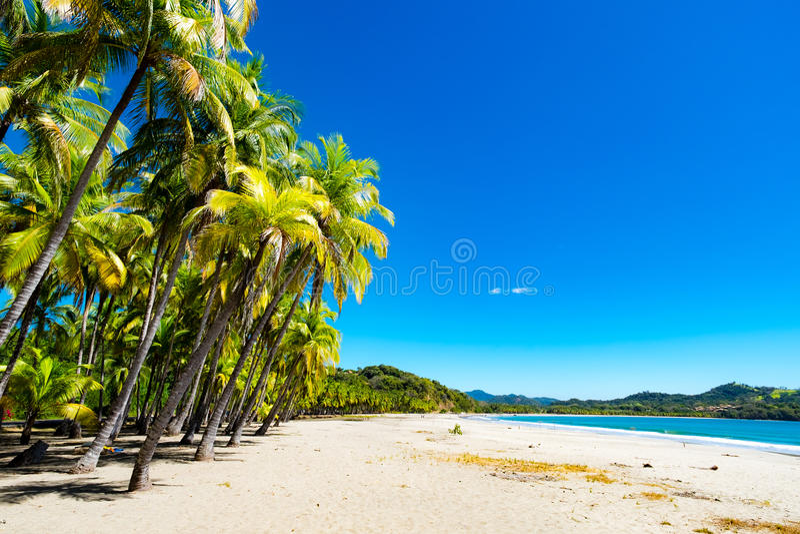 Palmas en la playa fotos de archivo