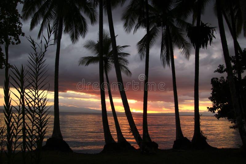 Palmas en la puesta del sol imágenes de archivo libres de regalías