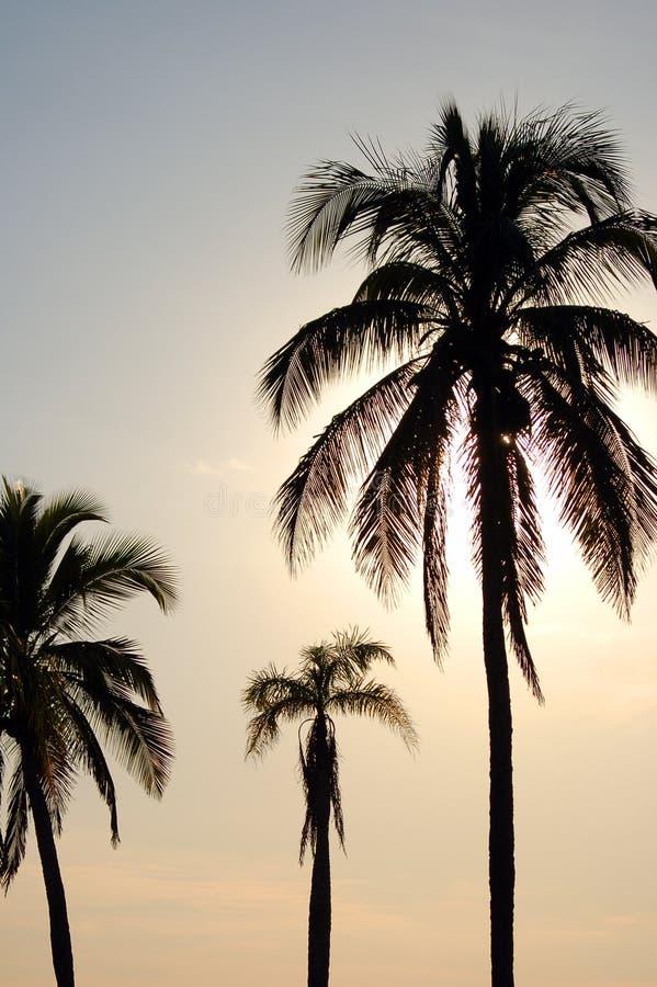 Palmas en la puesta del sol imagen de archivo