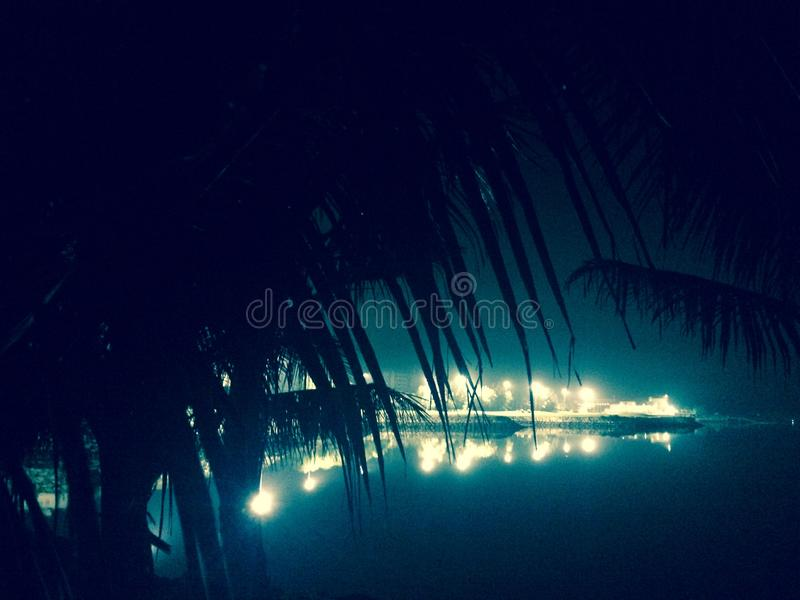 Palmas en noche fotografía de archivo libre de regalías