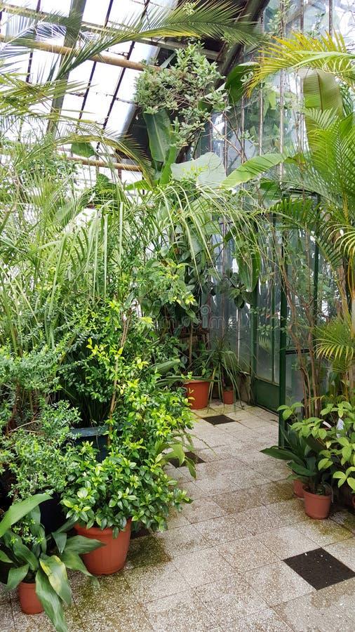 Palmas en Sofia Botanical Garden, Bulgaria imagen de archivo libre de regalías