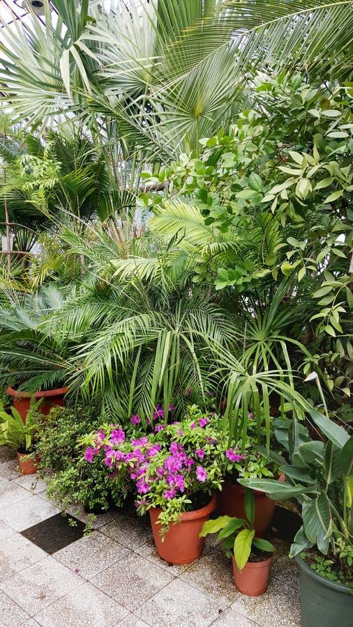 Palmas hermosas en Sofia Botanical Garden imagenes de archivo