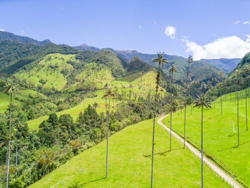 Palmas no vale de Cocora da opinião aérea de Salento imagem de stock royalty free