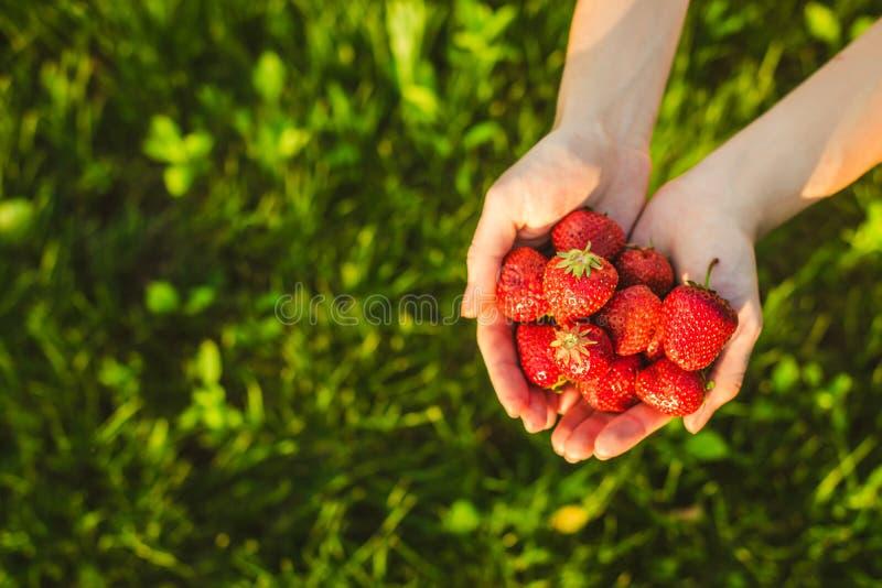 Palmas por completo de fresas fotografía de archivo