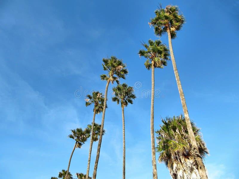 Palmas tropicais com um céu azul fabuloso imagem de stock