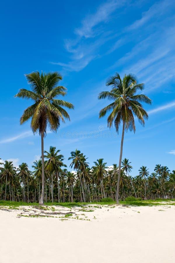 Palmas Verdes Em Uma Praia Branca Da Areia Foto de Stock