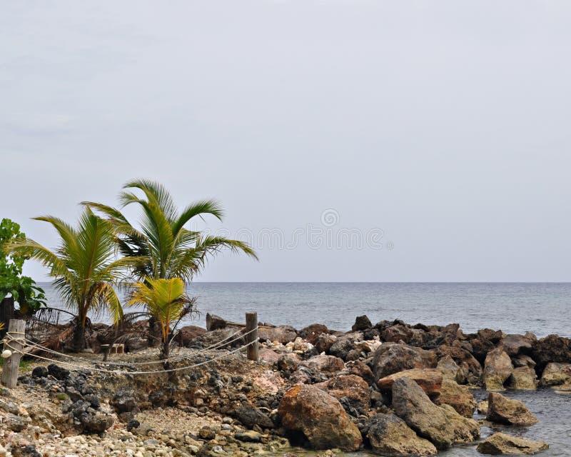 Palmas y línea de la playa rocosa