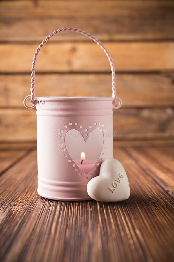 Palmatoria rosada. fotografía de archivo libre de regalías