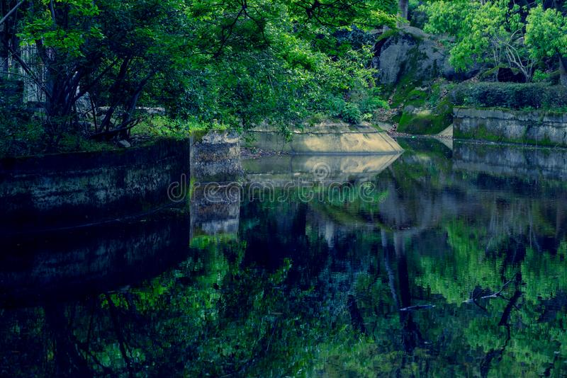 Palmatum Reflexão-macio de folha-Acer da água fotografia de stock