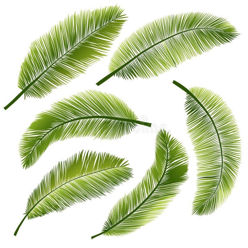 Palmblätter lizenzfreie abbildung