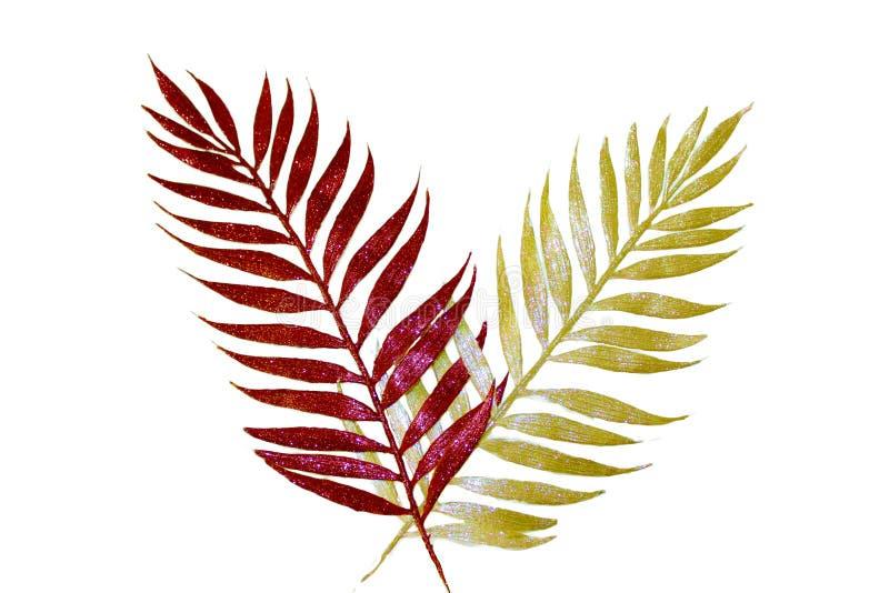 Palmblätter lizenzfreies stockfoto