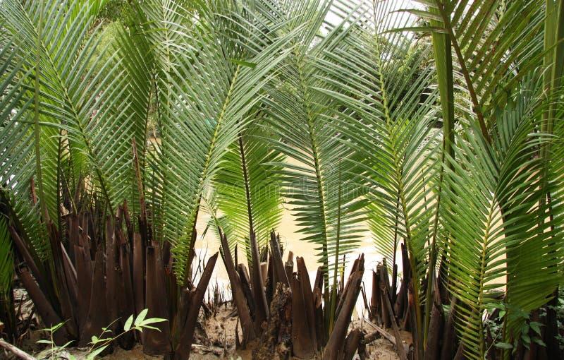Palmblätter backgroung lizenzfreies stockbild