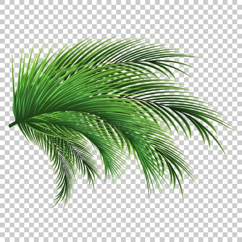 Palmbl?tter Grünes Blatt der Palme auf transparentem Hintergrund Ausf?hrliche vektorzeichnung stockbild