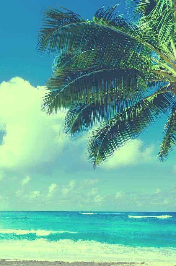 Palmblad över havet i Hawaii (tappningstil) arkivbilder