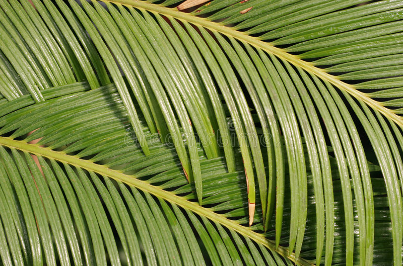 Palmblad stock fotografie