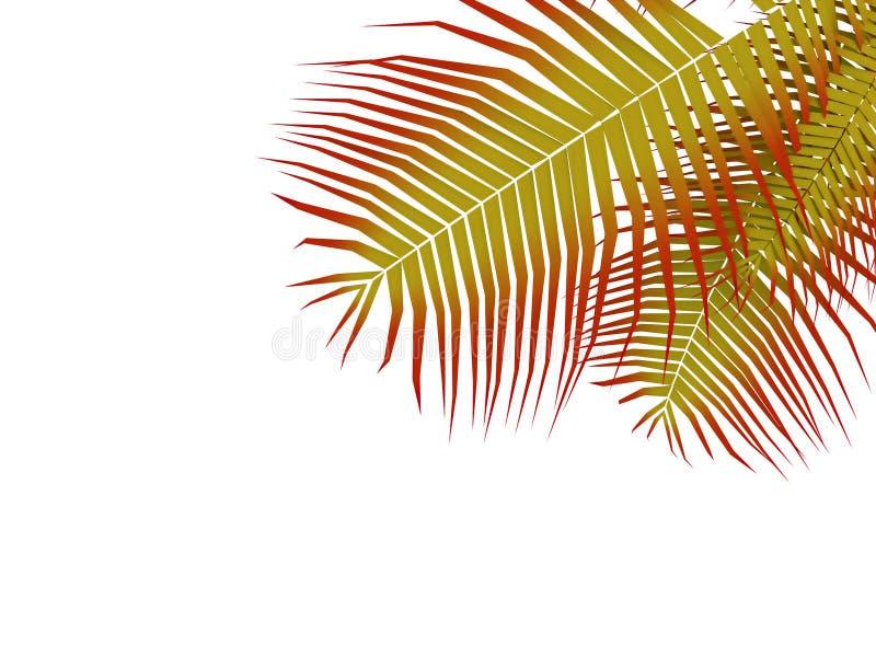 Palmblad royalty-vrije illustratie