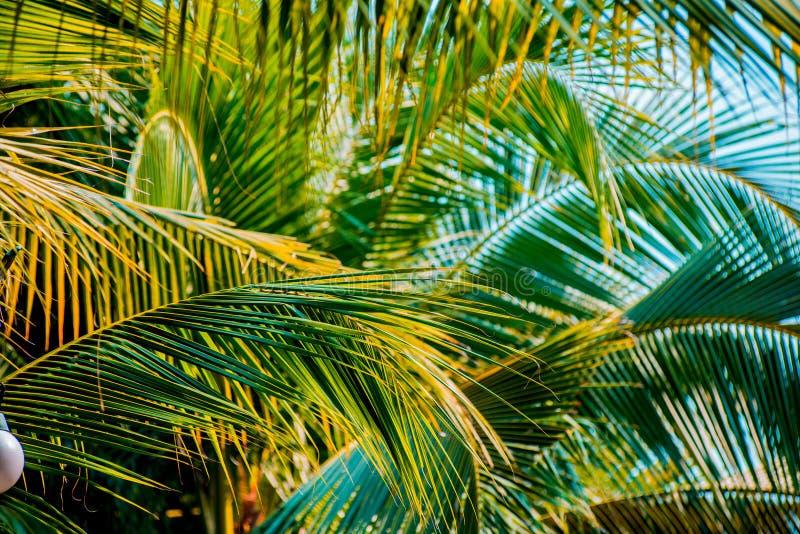 Palmblad royaltyfri foto