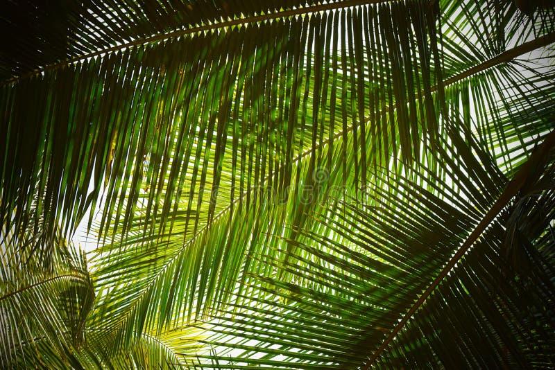 Palmblad - abstrakt grön naturlig bakgrund arkivfoton