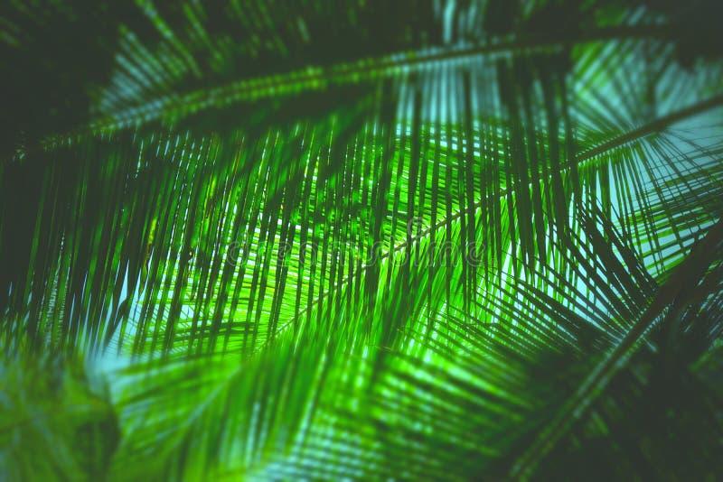 Palmblad - abstrakt grön naturlig bakgrund med suddighet arkivfoto